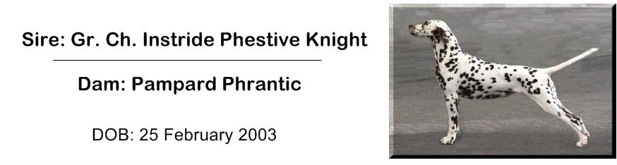 Instride Phestive Knight.3